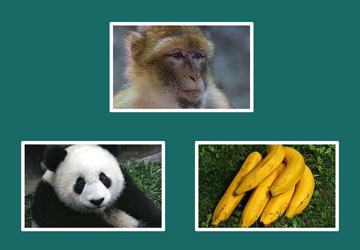 원숭이 바나나.png